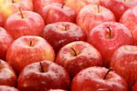 Dam pracę sezonową w Norwegii – zbiory jabłek od zaraz Hamar