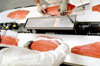 Praca w Norwegii przy produkcji rybnej bez języka od zaraz Bergen