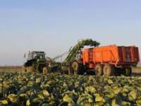 Norwegia praca sezonowa przy zbiorach warzyw bez języka Råholt