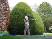 Sezonowa praca Norwegia w ogrodnictwie dla ogrodnika bez języka Stavanger