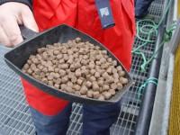Bez języka oferta pracy w Norwegii na produkcji karmy od zaraz w Kopervik 2015
