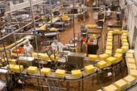 Norwegia praca na produkcji przy pakowaniu sera bez języka Fredrikstad