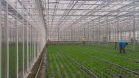 Sezonowa Praca Norwegia przy zbiorach warzyw w szklarni bez języka 2015 Elverum