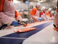 Bez języka praca Norwegia pakowanie na produkcji ryb Stavanger od zaraz