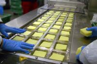 Norwegia praca w Oslo dla grup przy pakowaniu sera bez znajomości języka