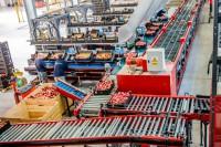 Praca Norwegia w Sandefjord bez języka na produkcji-sortowanie owoców