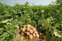 Sezonowa praca w Norwegii przy zbiorach warzyw polowych bez języka Eidsberg