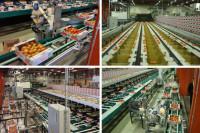 Praca w Norwegii przy pakowaniu warzyw dla par bez języka Moss od zaraz