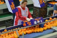 Praca w Norwegii na produkcji sortowanie owoców od zaraz bez języka Sandefjord