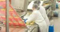Praca Norwegia w Oslo przy pakowaniu sera na produkcji bez języka