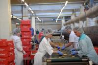 Bez języka praca w Norwegii pakowanie produktów spożywczych Oslo od zaraz