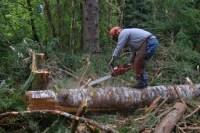 Dam sezonową pracę w Norwegii bez języka w leśnictwie przy wycince drzew
