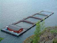Oferta fizycznej pracy w Norwegii bez języka na farmie rybnej Horten od maja 2016