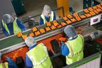Praca Norwegia od zaraz przy pakowaniu warzyw bez języka Moss
