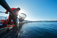 Ogłoszenie fizycznej pracy w Norwegii bez języka na farmie rybnej Horten