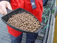 Dam pracę w Norwegii bez języka od zaraz produkcja karmy dla zwierząt Kopervik