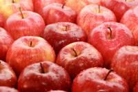 Seljord praca w Norwegii sezonowa przy zbiorach jabłek i gruszek bez języka