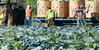 Rolnictwo ogłoszenie sezonowej pracy w Norwegii od zaraz bez języka