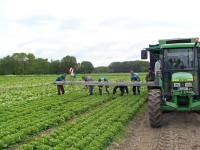 Norwegia praca sezonowa przy zbiorach warzyw od zaraz Kongsberg 2016