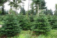 Dam sezonową pracę w Norwegii w leśnictwie przy choinkach od zaraz Trondheim