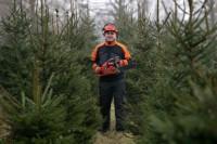 Dam sezonową pracę w Norwegii przy choinkach w leśnictwie od zaraz Trondheim
