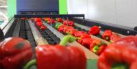 Ogłoszenie pracy w Norwegii od zaraz przy pakowaniu warzyw bez języka Moss