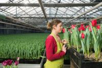Ogrodnictwo od zaraz oferta sezonowej pracy w Norwegii bez języka Hamar