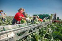 Norwegia praca w rolnictwie od zaraz bez znajomości języka zbiory warzyw Moss