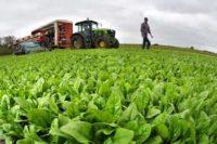 Sezonowa praca Norwegia od zaraz pomocnik w rolnictwie bez języka dla par i grup Moss