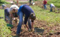 Sezonowa praca w Norwegii od zaraz, jako pomocnik w rolnictwie bez języka Moss