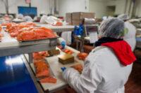 Pracownik produkcji Norwegia praca od zaraz przy rybach z j. angielskim, Bergen