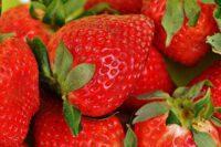 Bez języka sezonowa praca w Norwegii zbiory owoców na wakacje 2020 Magnor