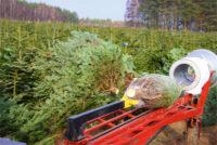 Od zaraz dam sezonową pracę w Norwegii bez języka leśnictwo przy choinkach Trondheim