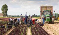 Bez języka dla par sezonowa praca Norwegia w rolnictwie od zaraz Moss 2021